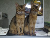 081012cats
